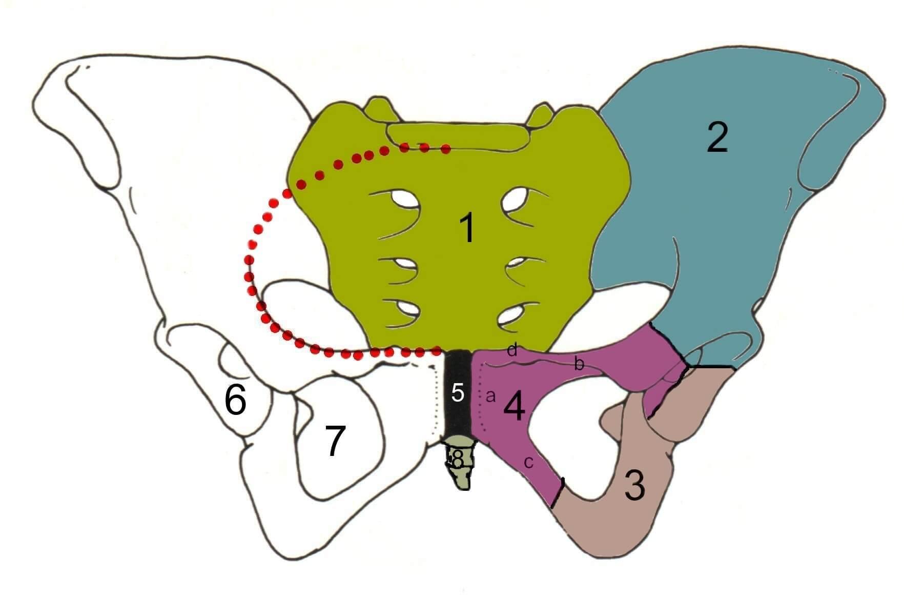 hoe span je de bekkenbodem aan? — jouw bekkentherapeut